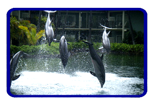 Kahala resort and dolphins